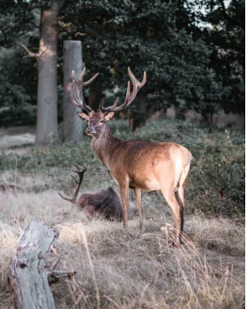 Wild eten in Nederland 2